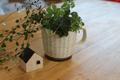 マグカップで寄せ植え&完成見学会