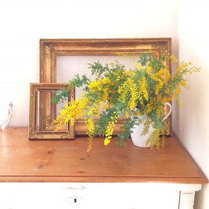 黄色い花の魅力
